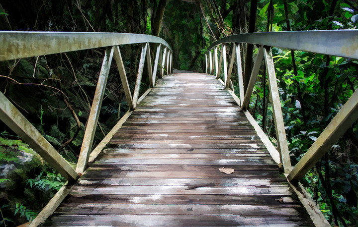 Bridge into the Rainforest, Gold Coast